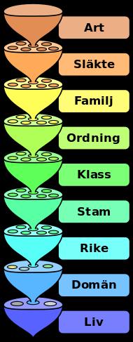 biological_classification_l_pengo_sv_svg