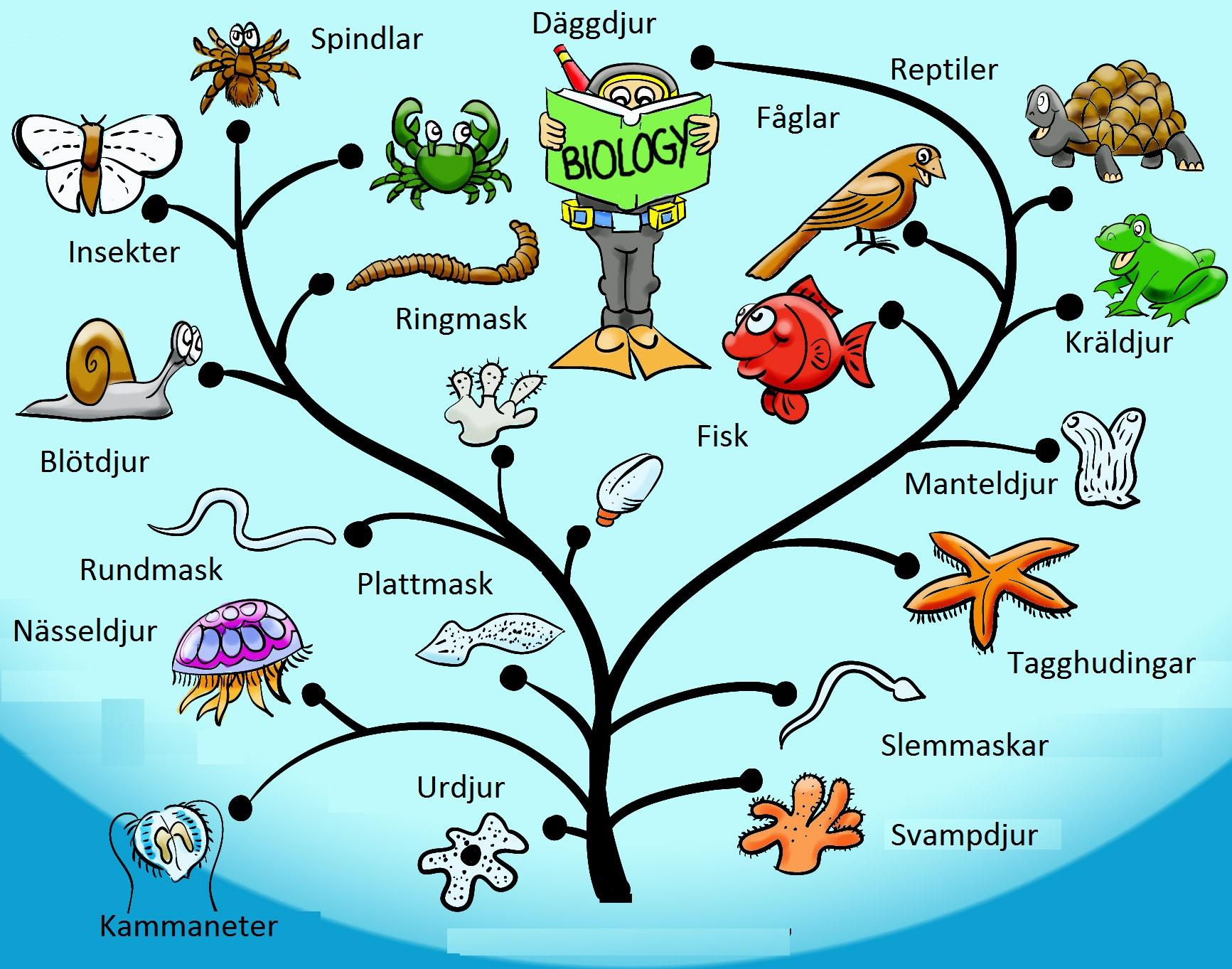 Evolutionary Tree original