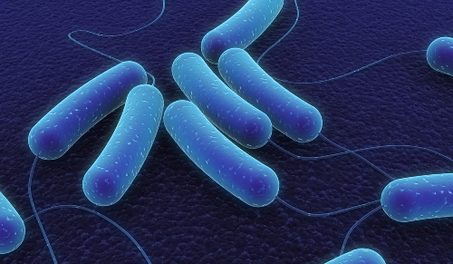 pic-of-archaea