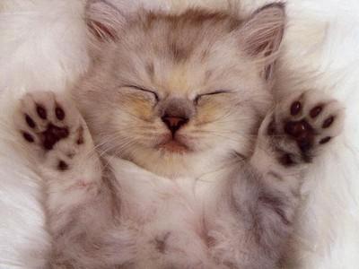 cute_kitten_100604350