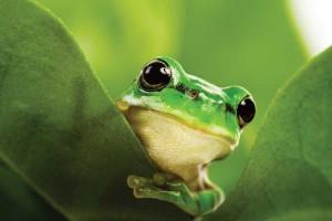 green biodiversity frog