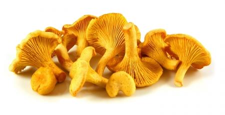 kantarell-svamp-liten