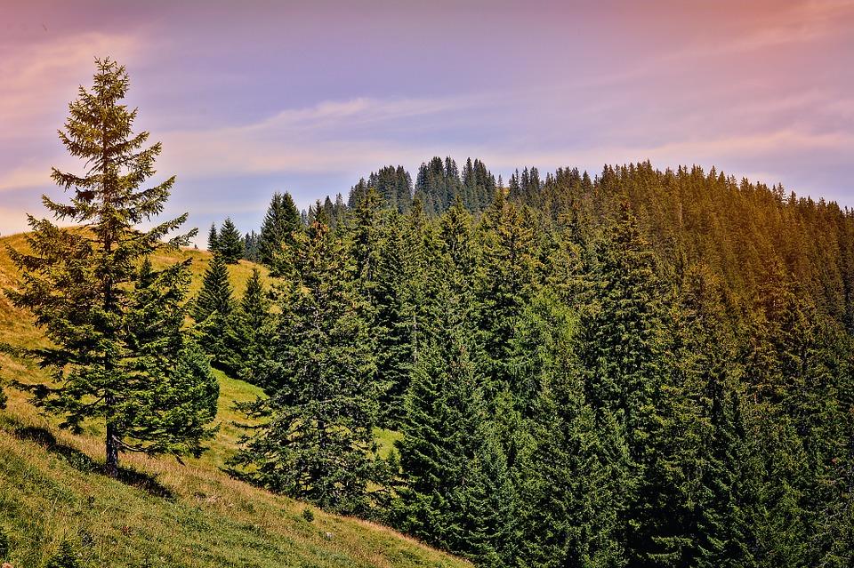 landscape-899256_960_720