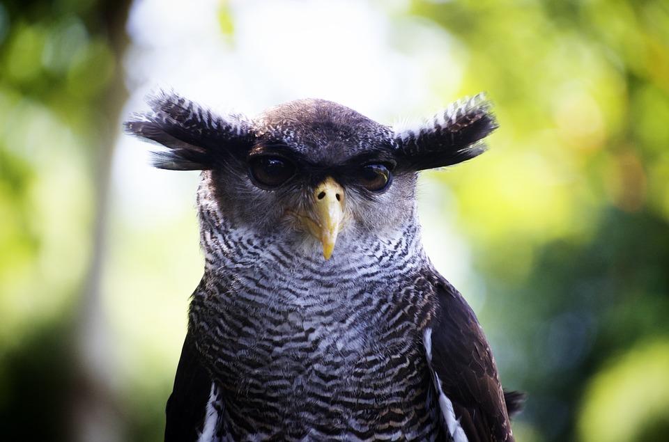 owl-1019062_960_720