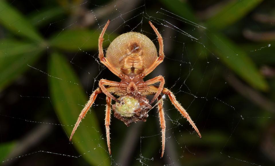 spider-1572791_960_720