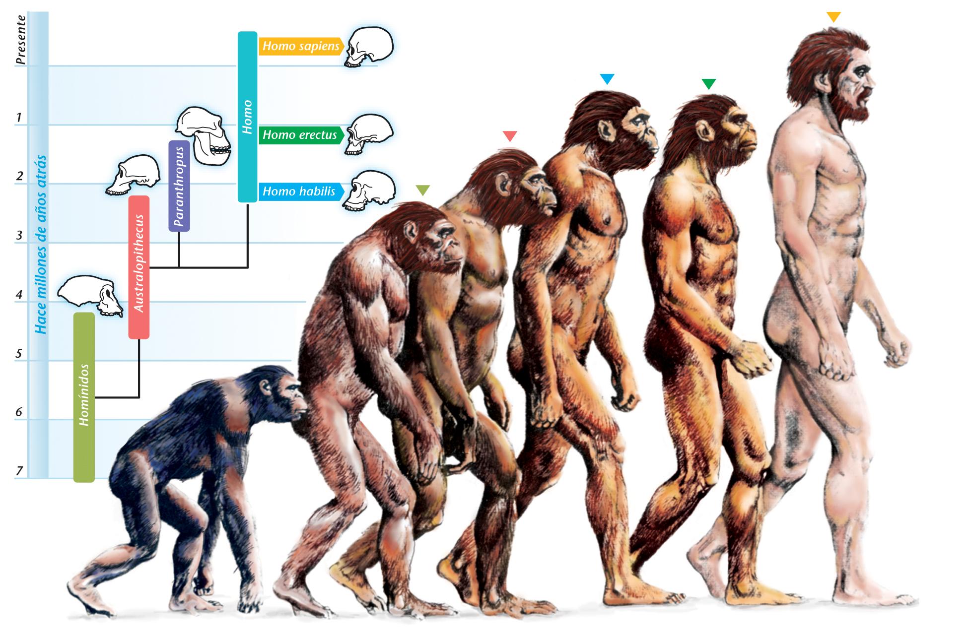 2. body-Evolution