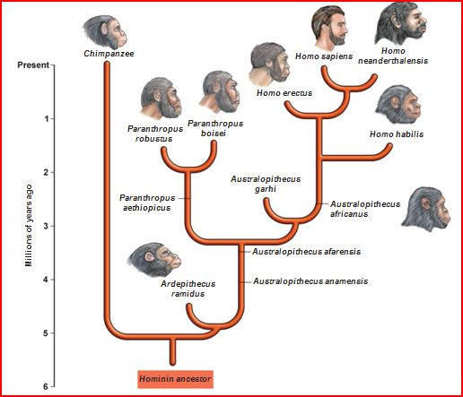 5. human-evolution